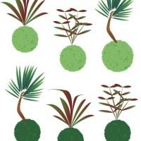 苔玉 グリーン 植物 自然