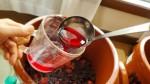梅干し作りで採れる「梅酢」は、暑い夏を乗り切るキーフード!