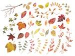 <10月25日>五感を使って自然と遊ぼう!大津市皇子が丘公園でネイチャーゲームが楽しめるよ
