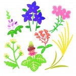 <9月20日>おりがみで秋の七草を作ってみよう!参加費無料【大津市 北部地域文化センター】