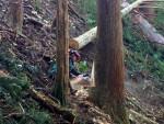 ★参加費無料★普段見ることができない杉の伐採現場を見に行こう♪11/21(土)山師の仕事見学ツアーin奥永源寺