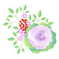 素材 葉牡丹 正月 植物 アレンジメント