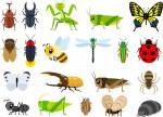 昆虫好きなお子様にいかがですか?昆虫モチーフブランド『インセクトコレクション』のホームページから無料ドリルがダウンロードできますよ♪