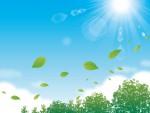 【大津市】瀬田公園の森の早春を飾る可憐な花「セリバオウレン」を観察しよう!自然を満喫して一緒にお勉強しよう!