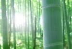 <3月20日>五感で楽しむ自然体験『新竹取物語とこだわり体験~春の祭典~』エコクッキング体験もあるよ【高島市】