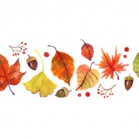 秋 どんぐり 木の実 紅葉 自然 山