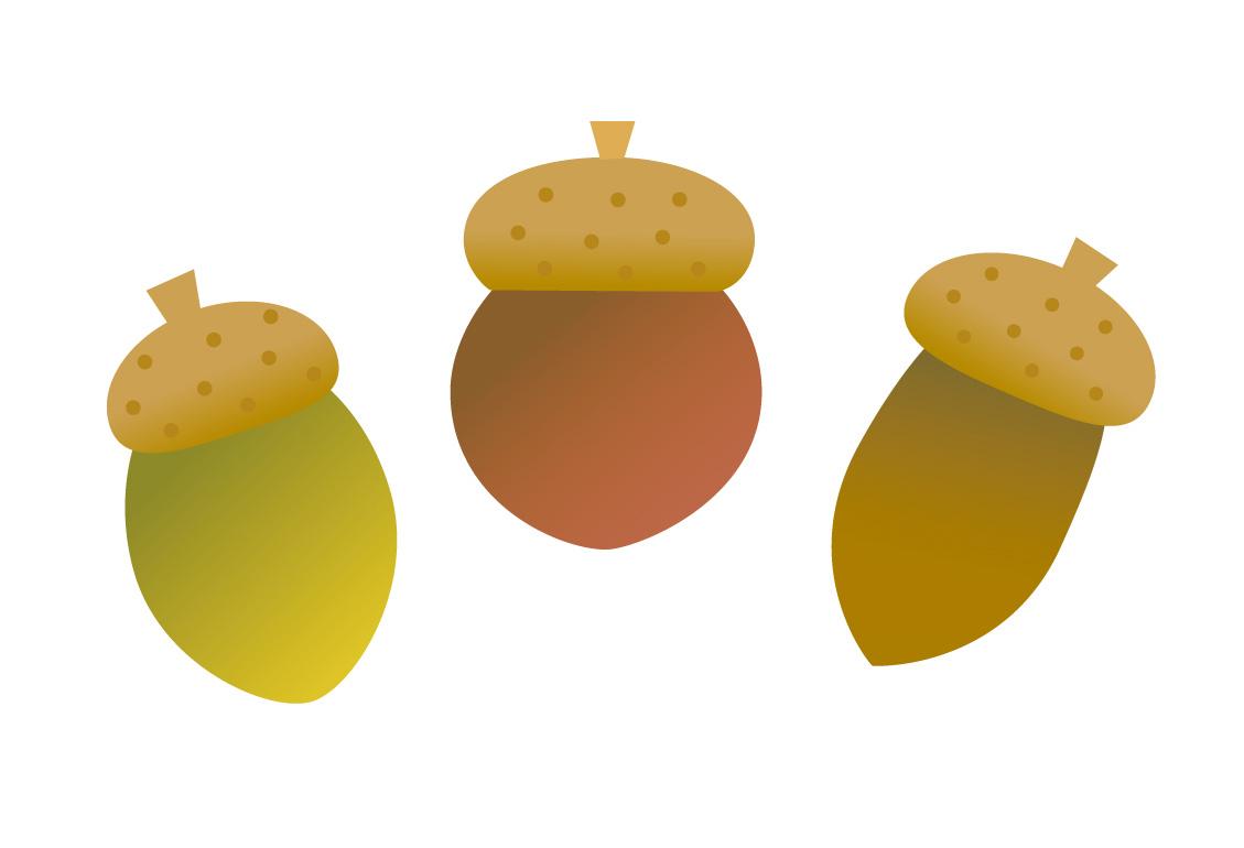 donguri
