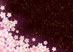 多賀大社でしだれ桜のライトアップが始まりました!夜のしだれ桜に癒やされませんか?【4月11日まで!】