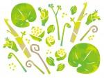 <5月2日>親子で体験山菜ツアー!触れて・食べて、自然体験を楽しもう!【ウッディパル余呉】