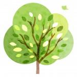 《5月4日》木の上の世界を楽しもう!大津市のびわこ文化公園で「ツリーイング きのぼり体験」が開催!