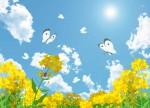 【東近江市】道の駅  あいとうマーガレットステーションにて菜の花園が開園!入園無料☆摘み取り体験は200円☆