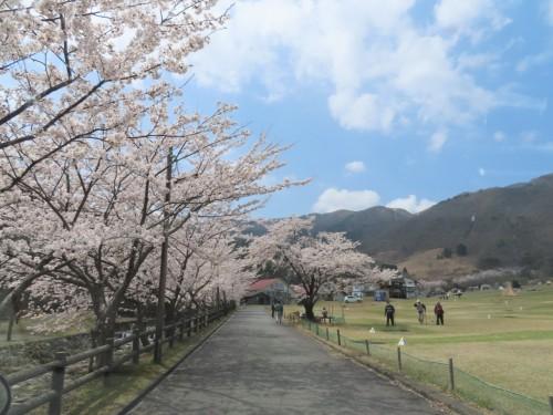 マキノ高原キャンプ場_210414_0
