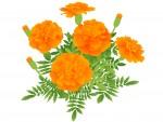 【5月30日】マリーゴールドの花やヨモギを使って草木染めにチャレンジしませんか?☆草津市ロクハ荘☆