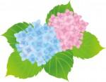 【6月1日〜】あじさいの名所「もりやま芦刈園」が開園。1万本のあじさいを見に行こう♪