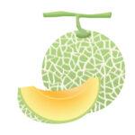 《7月18日》ヤンマーミュージアム×長浜市共同企画「親子メロン収穫体験」が開催!夏休みの自由研究にもピッタリ♪