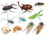 <7月25日>昆虫のことをもっと知りたい!夏休み「昆虫の名前しらべ」【みなくち子どもの森】