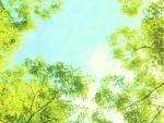 <6月20日>三井寺でおいしいこと『三井寺つながるマーケット』体に優しいおいしいグルメや手作り品が大集合☆