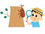 <7/3~25の土日祝限定>モクモクファーム「カブトムシの森」でカブトムシを探して観察してみよう!