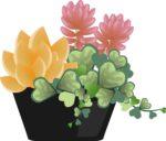 <10月23日>参加費無料!花苗&プランターも用意してもらえる!土山サービスエリアで「こども花の寄せ植え体験」★要予約