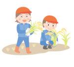 《10月17日》親子で稲刈りを手伝おう!守山市のみさき自然公園で稲刈り体験の参加者を募集中!限定5組・事前予約制☆