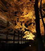 《11月12日〜29日》国宝建築と1,000本の紅葉のコラボレーション!石山寺で紅葉ライトアップ「あたら夜もみじ」が開催!
