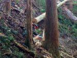 年に1度のイベント♪大木がごう音を上げながら倒れる光景は圧巻!11/20(土)「山師のお仕事見学ツアー」開催!参加無料★