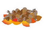 《11月28日》落ち葉のプールや木の実のクラフトで秋を満喫!野洲市の近江富士花緑公園で「落ち葉であそぼう」が開催!事前予約制☆